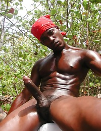 beautiful black cocks