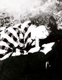 Black and white vintage porn
