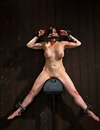 http://www.crocofetish.com/pictures/bondage/device-bondage/brunette-totally-owned-by-fuck-machine/195.jpg